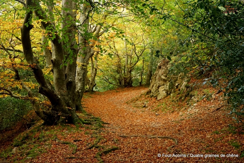 autumn-leaves-trees-path-trail-Wicklow