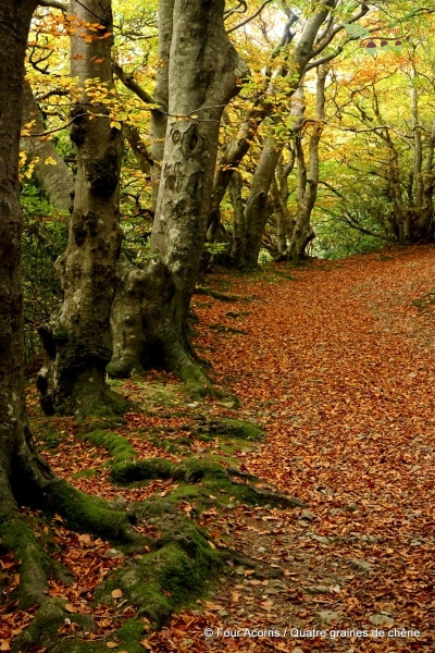 autumn-leaves-trees-trail-path-orange