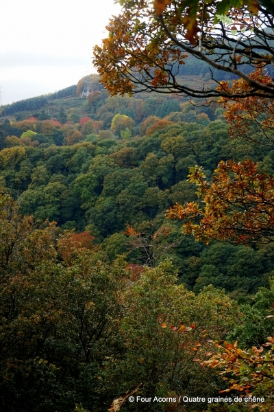 forest-autumn-leaves-trees-colours