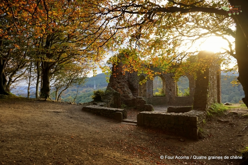Octagon-autumn-light-leaves-ruins