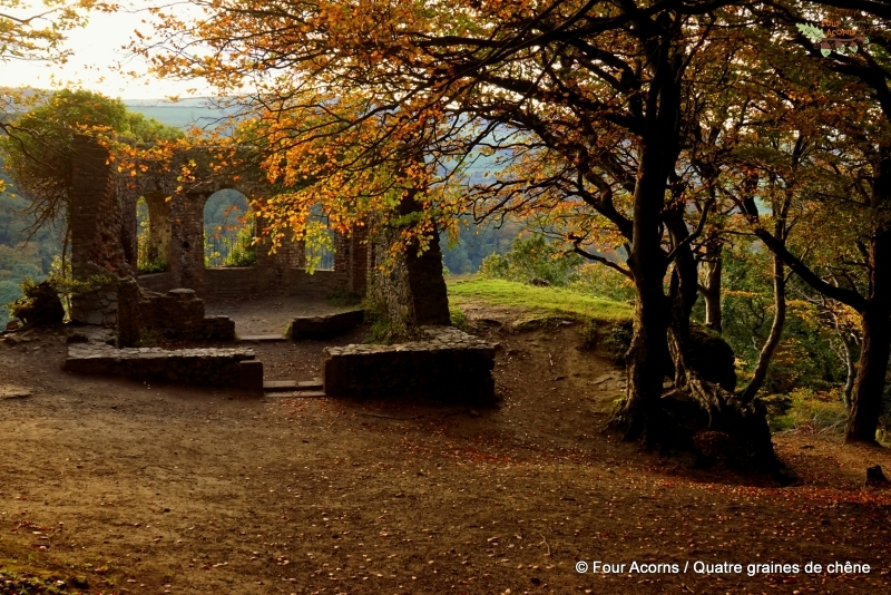 Octagon-Wicklow-Ireland-autumn-leaves-ruins