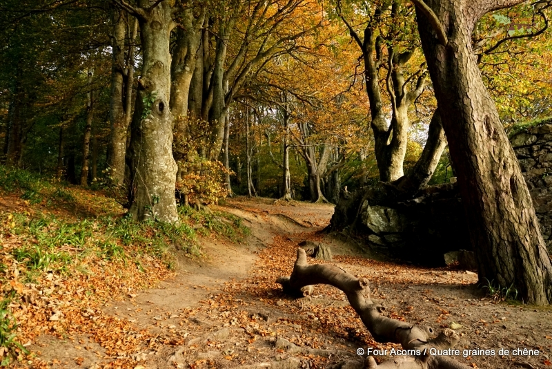 autumn-trail-trees-colours-wall