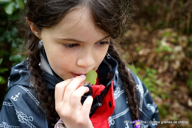 foraging-wicklow-wild-food