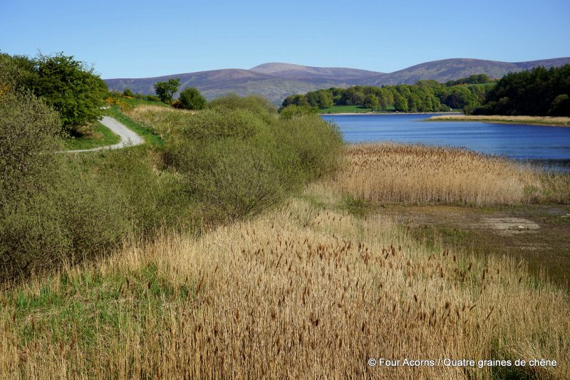 blessington-greenway-lake-reeds-mountains