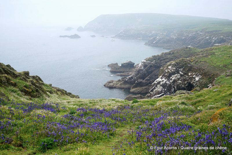 outdoors-nature-Saltee-island-Ireland