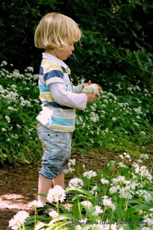 glen-of-the-downs-wild-garlic-child
