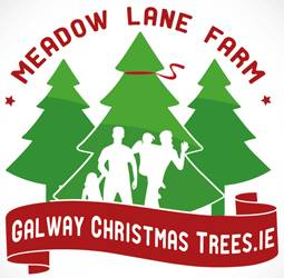 galway-christmas-trees1