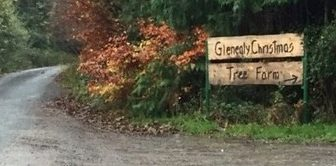 glenealy-christmas-tree-farm