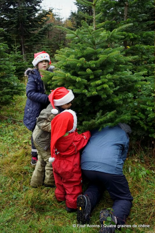 cutting-Christmas-tree-children-Santa-hats-Glenealy