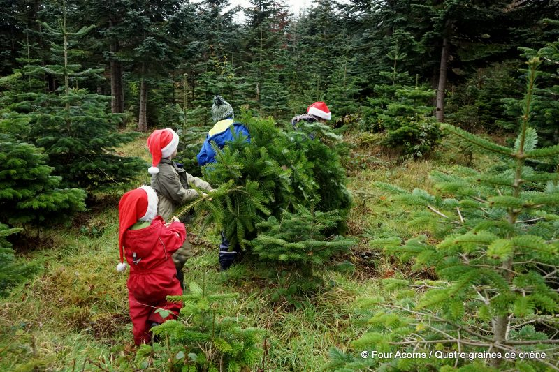 four-children-Santa-hats-carry-Christmas-tree-Glenealy