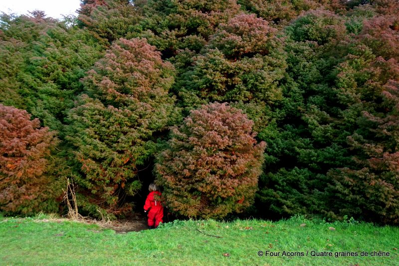 elf-child-red-suit-enters-japanese-cedar-dome-kilmacurragh-wicklow
