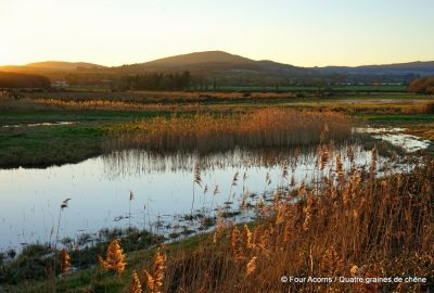 East Coast Nature Reserve, Wicklow, Ireland, Irlande, wetlands, zone humide, outdoor bloggers