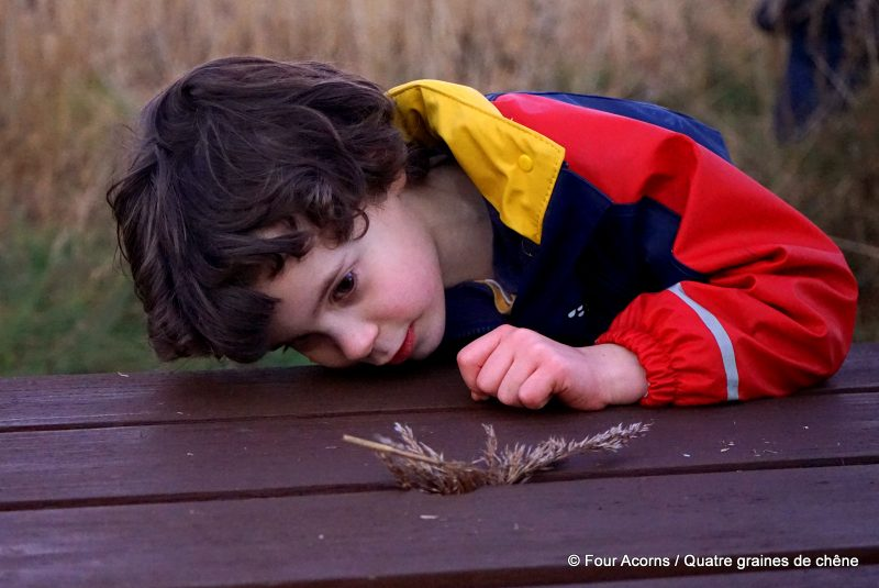 Wicklow, Ireland, Living Arrows, child play, rushes, reeds, observation