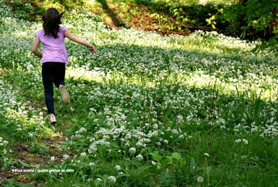 wild garlic, ail des ours, Killruddery, May Day,1er mai, Wicklow Ireland, Irlande