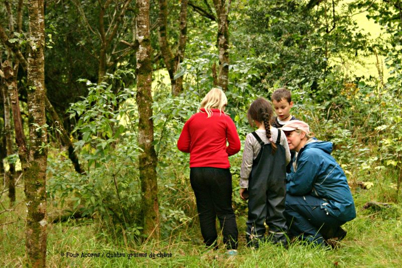IFSA-Irish-Forest-School-Association Earth-Force-Education