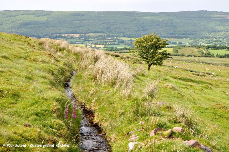 Glen of Aherlow, Tipperary, Ireland, Irlande, Galtee, Lough Curra, hiking, family, adventure, great outdoors, mountains, montagnes, plein air, randonnee, famille, hawthorn, aubépine