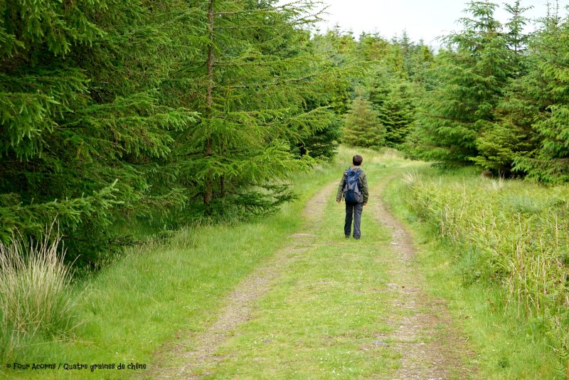 Glen of Aherlow, Tipperary, Ireland, Irlande, Galtee, Lough Curra, hiking, family, adventure, great outdoors, mountains, montagnes, plein air, randonnee, famille, forest, forêt