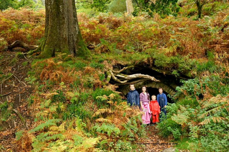 four-children-tree-cave-roots