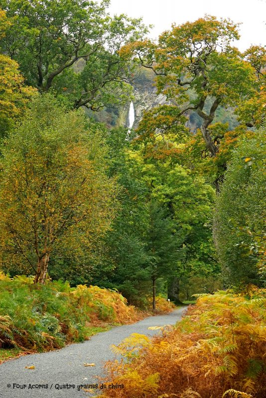 trail-autumn-colours-trees-waterfall