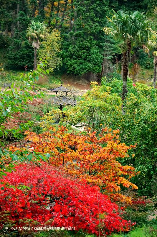 japanese-garden-autumn-colours-powerscourt