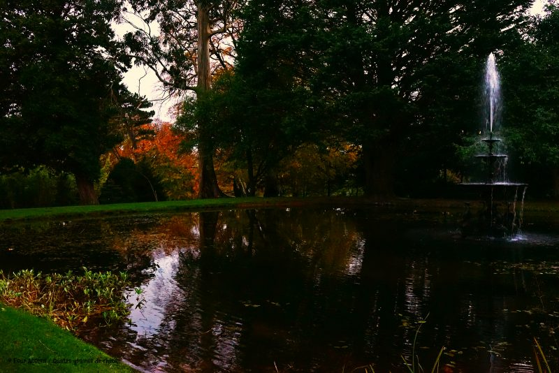 powerscourt-dolphin-pond-autumn-dusk-water-reflection
