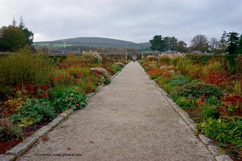 powerscourt-herbaceous-borders-wicklow-autumn