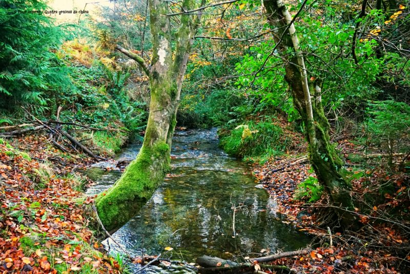 river-stream-autumn-tipi-adventures-wicklow-ireland