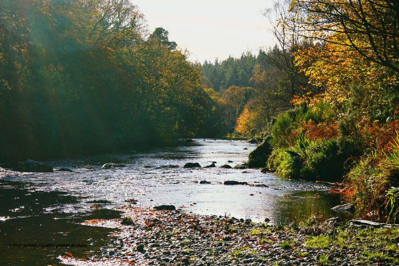 avonmore-river-wicklow-forest-autumn