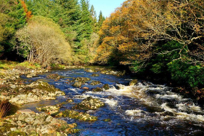 avonmore-river-trees-autumn-wicklow-blue-sky