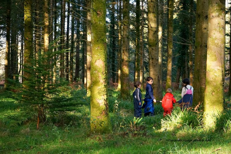 our-children-playing-woods-grass-sunshine