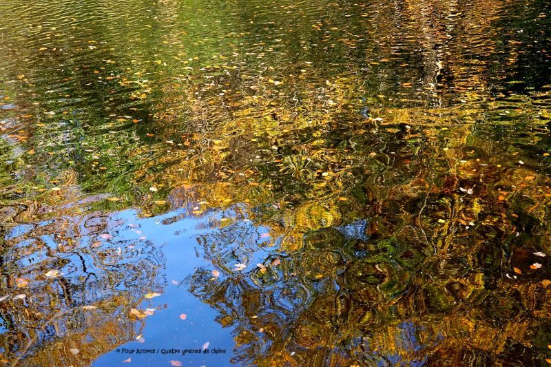 autumn-colours-reflection-river-water-leaves-sky