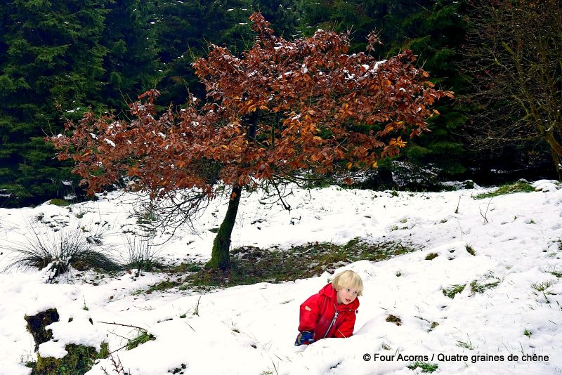 child-red-crawling-snow-tree-autumn-leaves