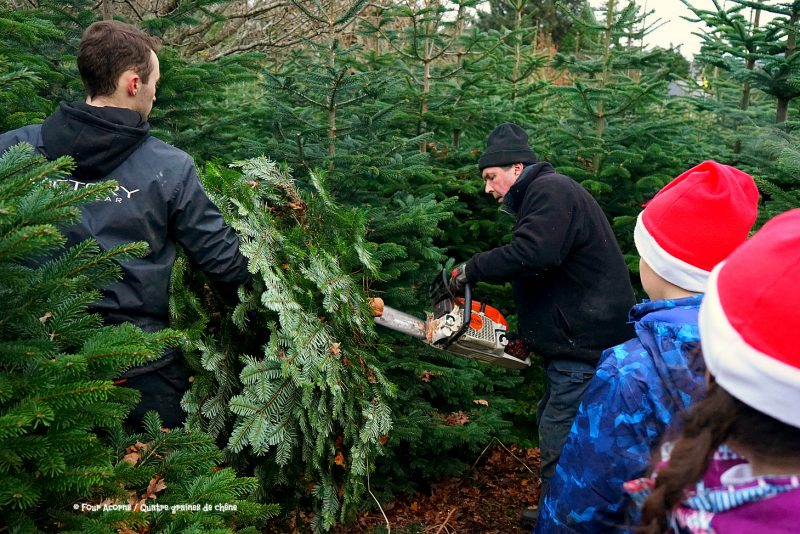 two-men-cut-christmas-tree-chainsaw-two-children-santa-hats-look-on