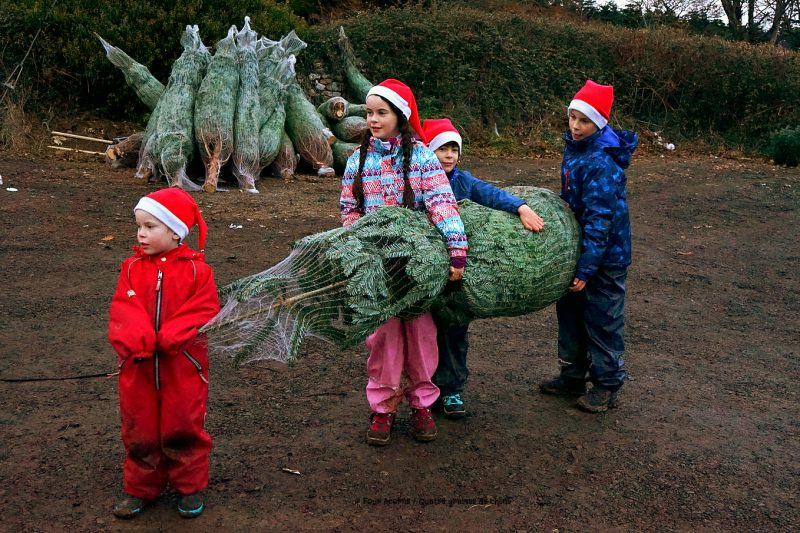 four-children-santa-hats-carry-netted-christmas-tree