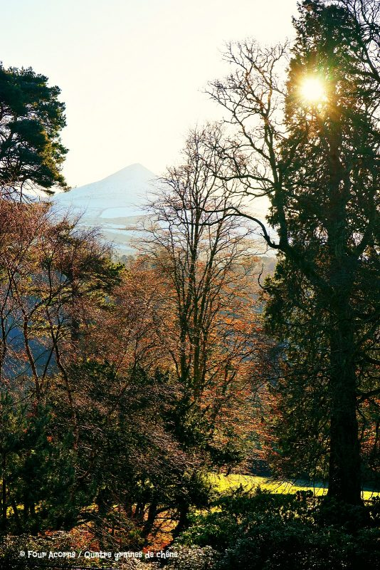 powerscourt-gardens-winter-sunshine-great-sugarloaf-snow