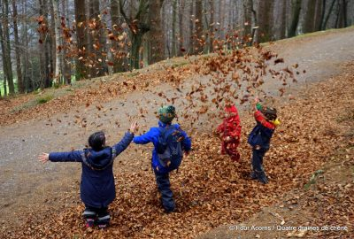 Crone Woods, Wicklow, Ireland, Irlande, autumn leaves, Four Acorns