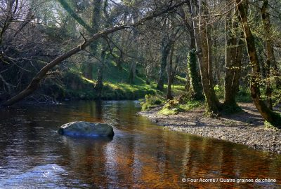 Dargle, river, Powerscourt, Wicklow, Ireland, Irlande