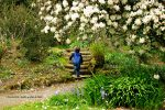 Kilmacurragh-botanic-gardens-white-flowers-child