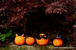 four-pumpkins-carving-leaves-Halloween