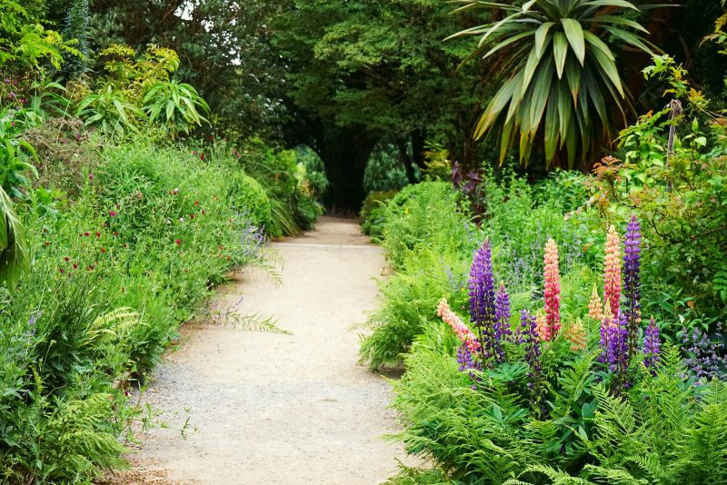 herbaceous-borders-lupine-flowers