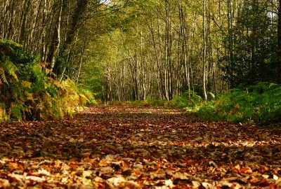 forest-trail-autumn-leaves-clara-vale-wicklow-ireland