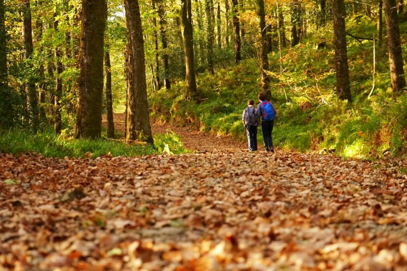 two-boys-walk-forest-trail-autumn-leaves-clara-vale-wicklow-ireland
