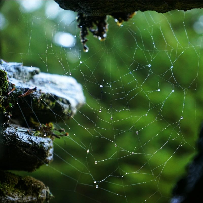 spider-web-raindrops-old-stone-ruins