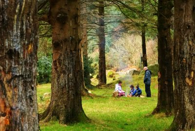 campfire-party-evergreen-trees-winter-glenmalure-wicklow-ireland