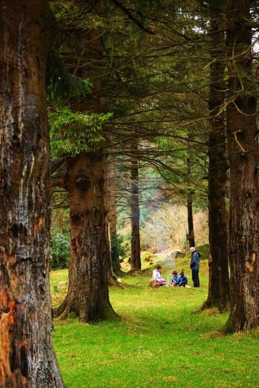 evergreen-trees-campfire-family-glenmalure-wicklow-ireland-winter