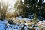 winter-wonderland-snow-forest-wicklow-ireland
