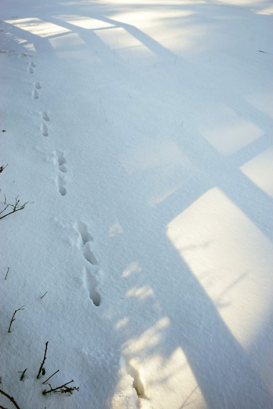 deer-prints-footprints-snow-tracking-wicklow-ireland
