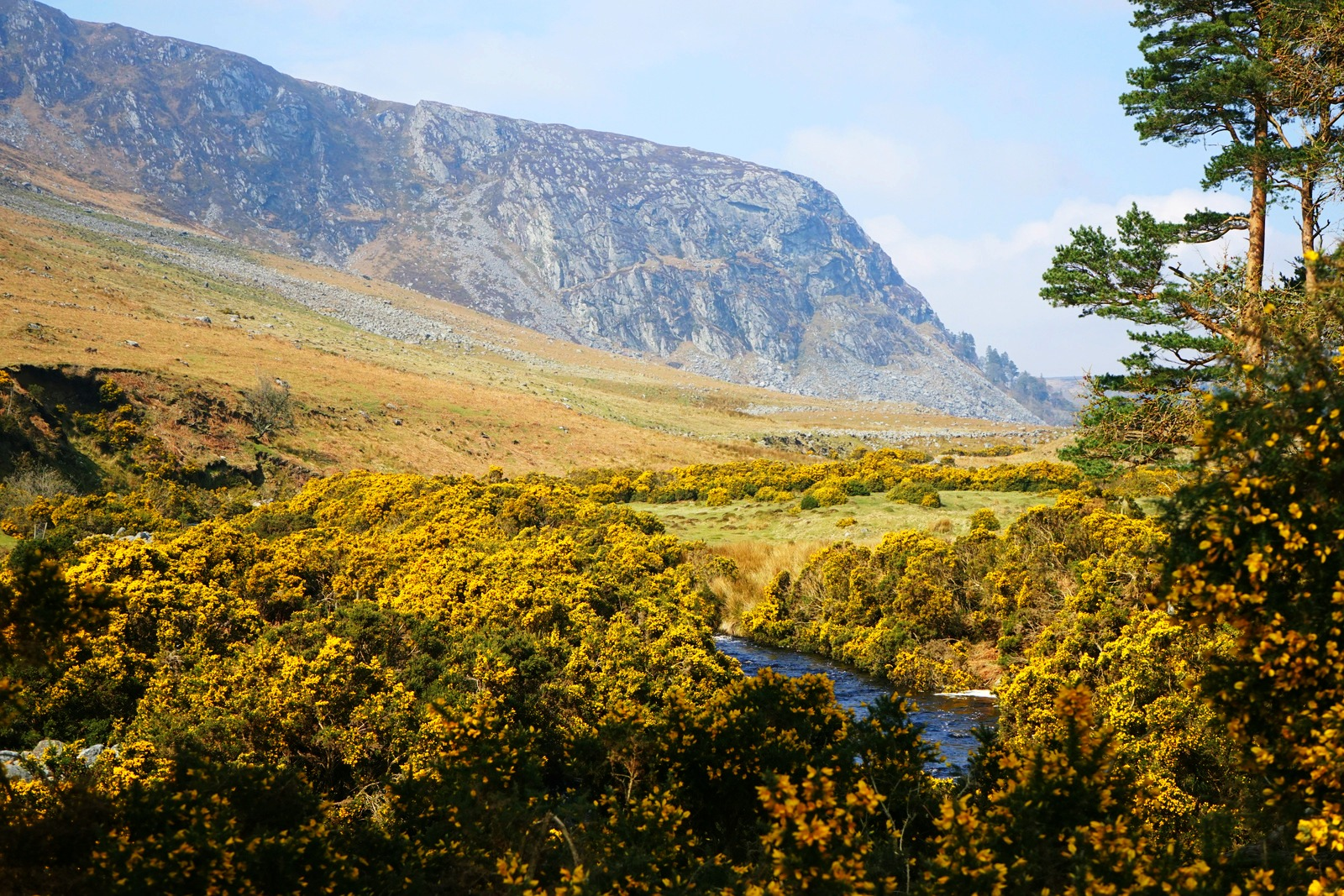 luggala-estate-valley-cliffs-cloghoge-river-gorse-flowers-wicklow-ireland