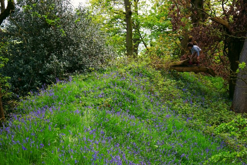 urney-fort-tyrone-northern-ireland-bluebells