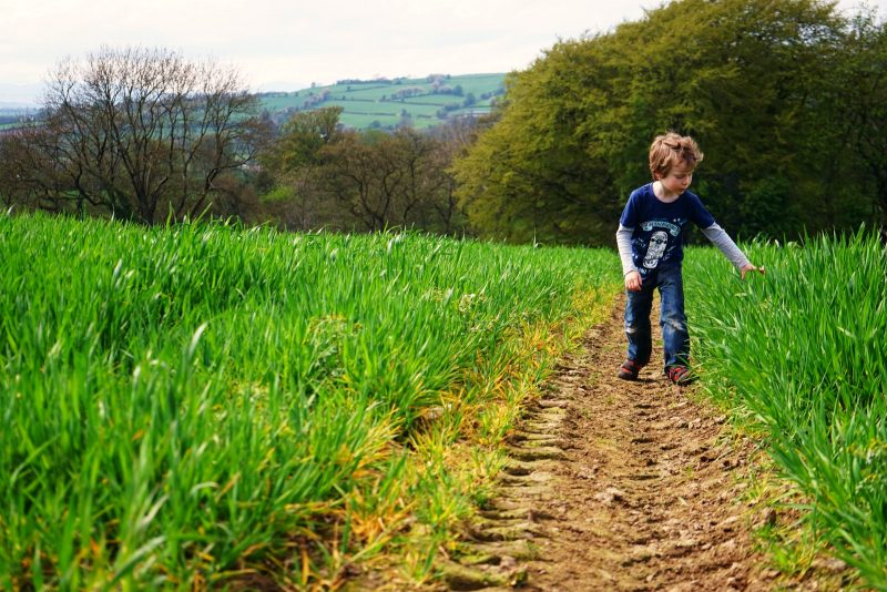 barley-field-little-boy-spring-sunshine